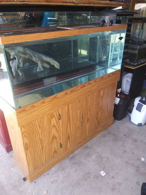 55 gallons fish tank and 306 fluval canister filter for Sale in Sacramento, CA