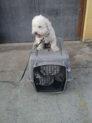 Kennel for dogs for Sale in San Diego, CA