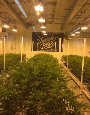 Clones for Sale in City of Industry, CA