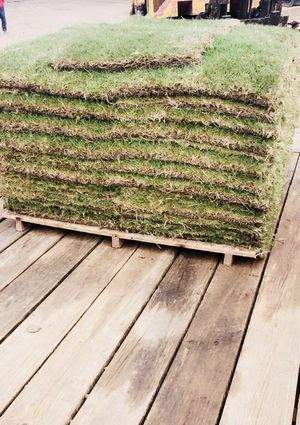 Bremuda grass pallets (Free Delivery for Sale in Rosenberg, TX