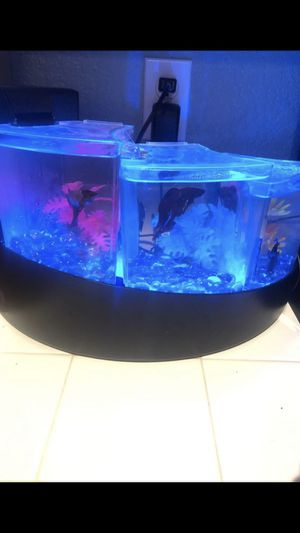 Three tier water for beta tank for Sale in Lancaster, CA
