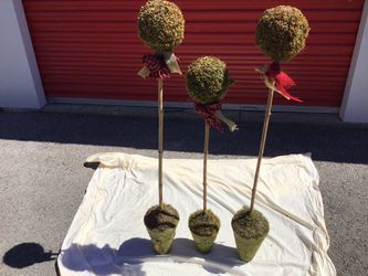 Topiaries for Sale in Arnold,  MO