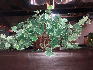 Pretty Small Decorative Fake Plant for Sale in Canton, MI