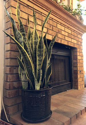 """Live """"Snake"""" plant (40"""" tall) in a beautiful contemporary 10"""" ceramic pot for Sale in Las Vegas, NV"""