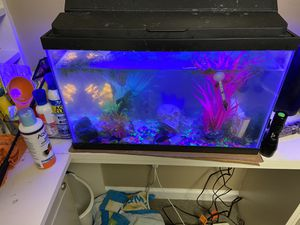 10 gal aquarium with fish. Filter accessories food chemicals and electric pump. All for only $25. Contact george. {contact info removed} for Sale in St. Louis, MO