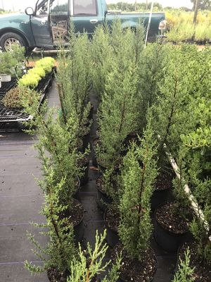 Pines for Sale in Miami, FL
