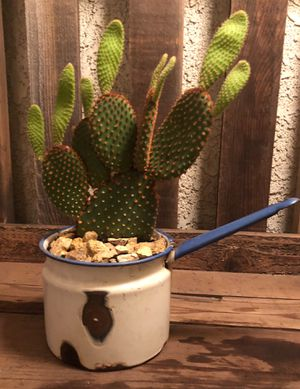 Yaya's Cactus 🌵 for Sale in Fresno, CA