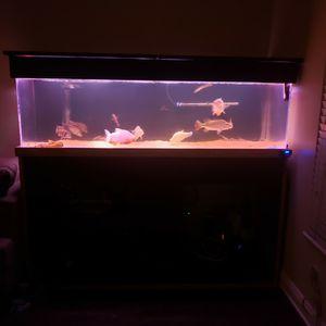 Acrylic Aquarium 180+sump Gallons for Sale in Anaheim, CA