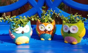 Cute owls with real succulents for Sale in Gilbert, AZ