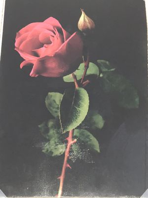 Rose painting for Sale in Wenatchee, WA