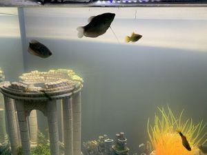 Brand New fish tank for Sale in Jacksonville, FL
