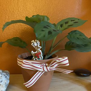 """Hirt's Green Prayer Plant Maranta In 4"""" Pot for Sale in Queens, NY"""