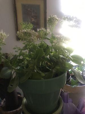 Houseplants for Sale in Dallas, TX