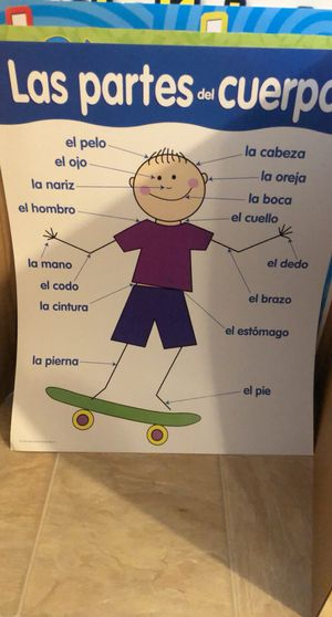 Spanish Educational Alphabet, Colors, Days of the Week, and Body Part Posters for Sale in Chesapeake, VA