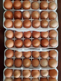 Farm Fresh 🐔Brown Eggs for Sale in Clayton,  OH