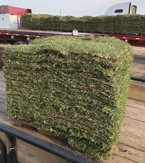 Grass pallets (Free Delivery) for Sale in Rosenberg, TX