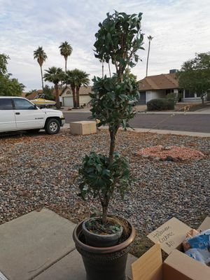 Topiary outdoor fake plant for Sale in Phoenix, AZ