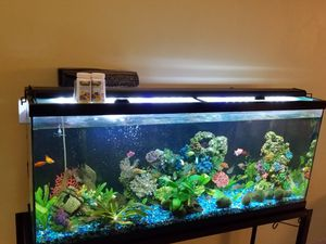 55 gallon Fish tank & stand among other items for Sale in Pompano Beach, FL