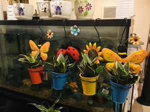 Snake plant floral hanging pot $12/each for Sale in Garden Grove, CA