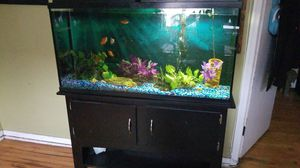 Fish tank w/ stand 60gallon for Sale in Chicago, IL