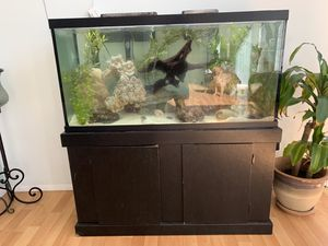 90 gallon Fish Tank and stand for Sale in Dixon, MO
