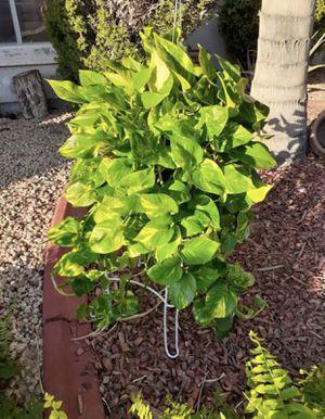 Plants for Sale in Avondale, AZ