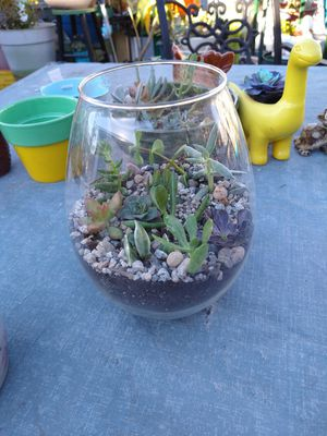 Succulents with glass vase for Sale in Montclair, CA