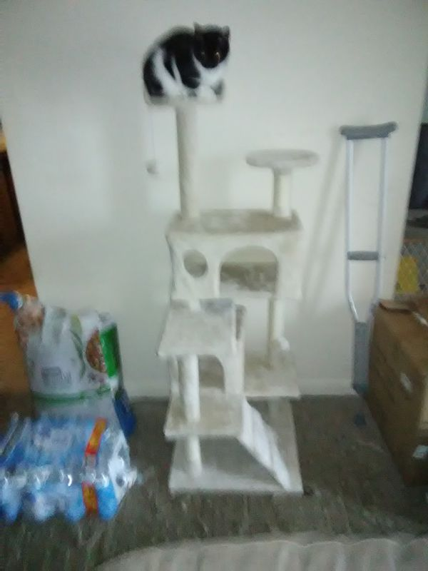 Brand new cat tower in box, just like one shown