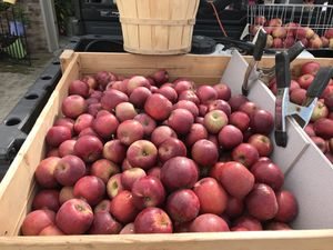 Red Delicious & Jonathan apples for sell for Sale in Easton, MO