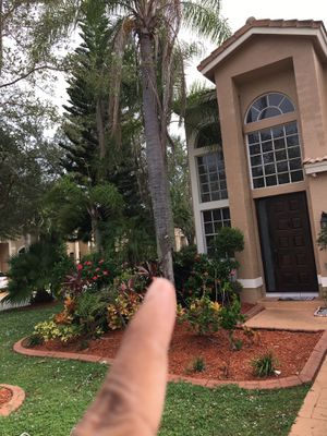 Syagrus trees for sale for Sale in Fort Lauderdale, FL