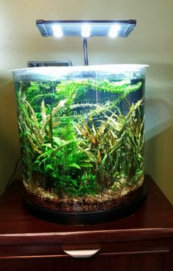 10G half moon tank for Sale in Ocala,  FL
