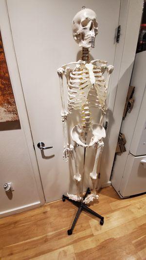 Skeleton for Sale in Santa Monica, CA