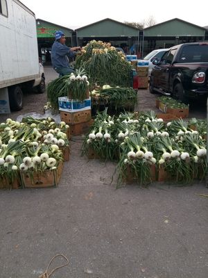 Onions for Sale in Lakeland, FL
