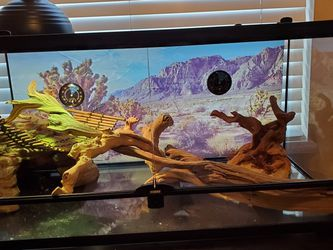 Reptile Tank for Sale in Chandler,  AZ