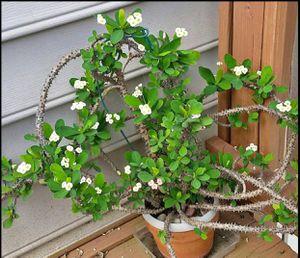 Plant for Sale in Woodbridge, VA