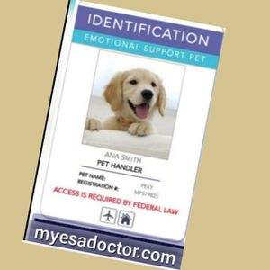 Get Identification card ♂️Emotional support for pet☆manage Mental Condition for Sale in Dallas, TX