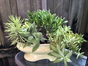 Beautiful large succulent planter garden for Sale in Palm Harbor, FL