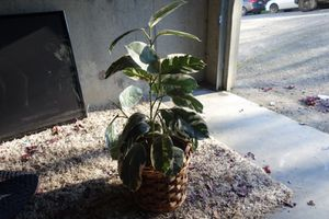3 foot tall fake plant for Sale in Seattle, WA