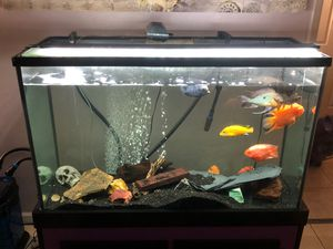 150 gallon fish tank with everything you see for Sale in Glendale, CA