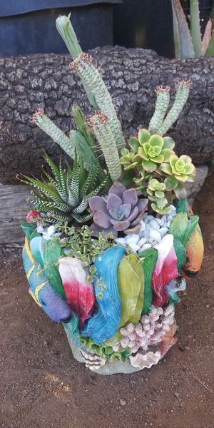 Succulent plants in colorful fish pot for Sale in Vista, CA