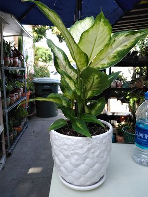 SHADE PLANT for Sale in Long Beach, CA