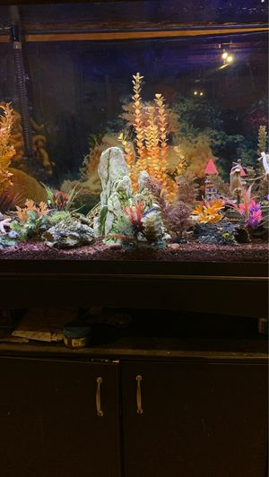 45 gal fish tank and cabinet for Sale in Tabernacle, NJ
