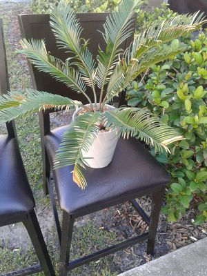 Plant 5 for Sale in Tampa, FL