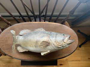 Small Mouth Bass taxidermy fish mount for Sale in Shelton, CT