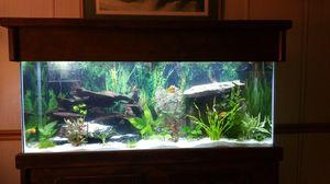 Fish Aquarium for Sale in Plymouth, MI