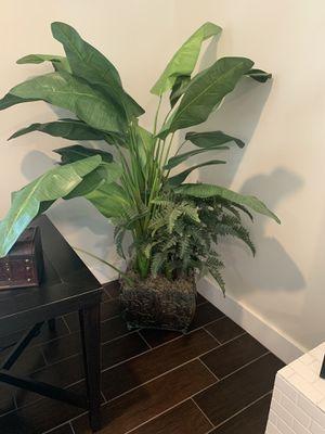 Fake Plant for Sale in Scottsdale, AZ