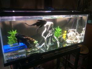 60 Gallon Fish Tank/Aquarium Only!!! for Sale in Los Angeles, CA