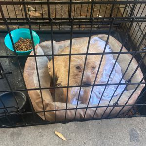 Puppy For Sale for Sale in Tampa, FL