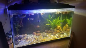 Beautiful 10 Gal Fish Tank Set up with Tropical Fish for Sale in Riverside, CA