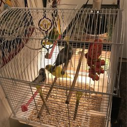 4 Parakeets for Sale in Houston,  TX